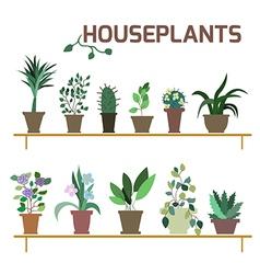 Set of indoor plants in pots vector
