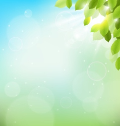 Tree foliage with sunlight on sky floral nature vector