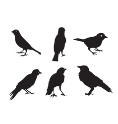 Birds silhouettes isolated on white vector