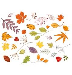 Autumnal leaves and plants vector
