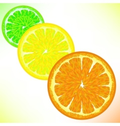 Lime lemon orange vector