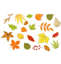 Colorful autumnal leaves and plants set vector