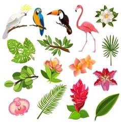 Tropical birds and plants pictograms set vector