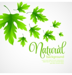 Natural background with green spring leaves vector