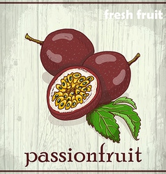 Hand drawing of passionfruit fresh fruit sketch vector