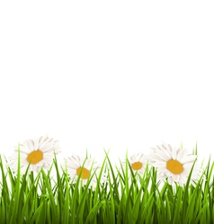 Green grass lawn with white chamomiles isolated on vector