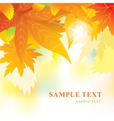Soft background with autumn leaves vector