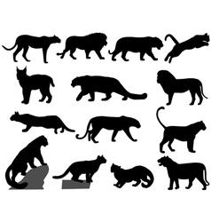 Wildcats vector