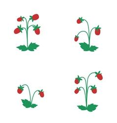 Wild strawberry bushes vector