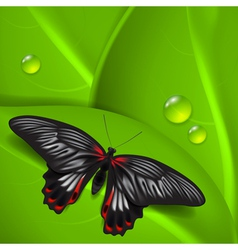 Green background with butterfly and dew vector