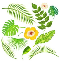 Tropical leaves and flowers vector