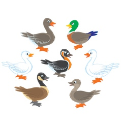 Ducks and geese vector
