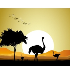 Ostrich silhouette vector