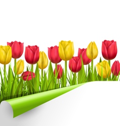 Green grass lawn with tulips and wrapped paper vector