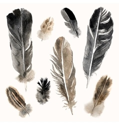 Watercolor feathers set on white background vector