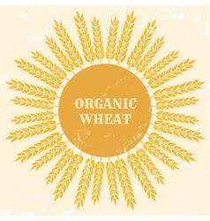 Organic wheat vector