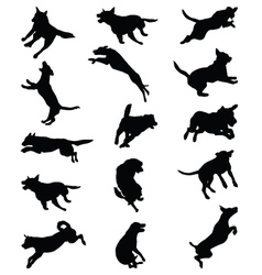 Dogs jumping vector