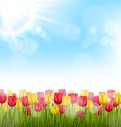 Green grass lawn with tulips and sunlight on sky vector