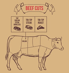 Vintage butcher cuts of beef scheme vector