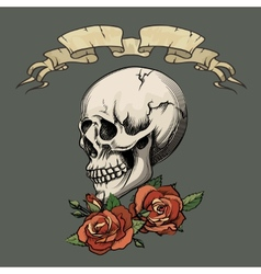 Human skull with roses vector
