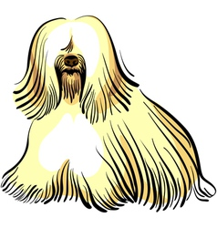 Color sketch of the dog tibetan terrier breed sitt vector