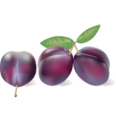 Plum juice vector