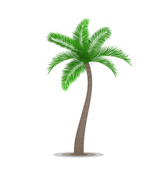 Tropical palm tree symbol vector