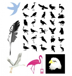 Collection of birds vector