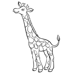 Giraffe eating leaves from the tree vector