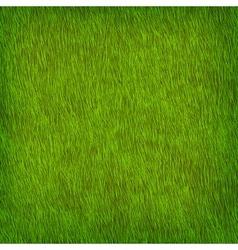 Green grass texture vector