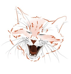 Face red cat vector