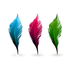 Color feathers vector