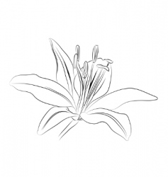 Outline lily vector