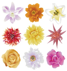 Collection of colorful flowers vector