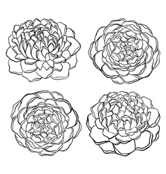 Set of black and white flower isolated vector