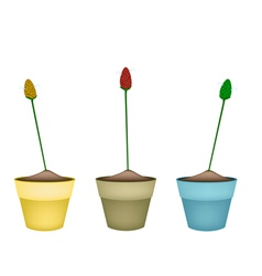 Zingiber zerumbet plants in ceramic flower pots vector
