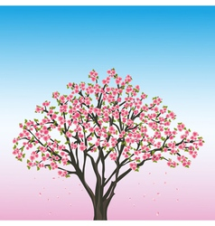 Beautiful spring background with sakura vector