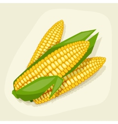Stylized of fresh ripe corn cobs vector