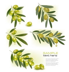 Set of backgrounds with green olives vector