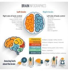 Brain inforgaphics set vector
