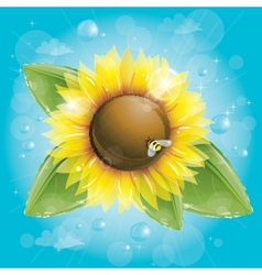 Beautiful sunflower and green leaves against blue vector