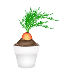 Fresh orange carrot in ceramic flower pots vector