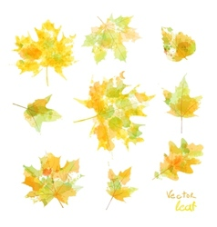 Watercolor autumn leaves maple leaf flora vector