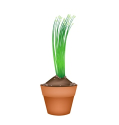 Fresh garlic chives in ceramic flower pots vector