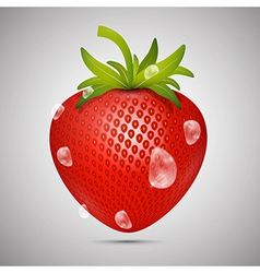 Red strawberry with water drops on grey background vector