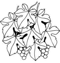 Grape vine vector