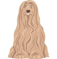 Bearded collie dog cartoon vector