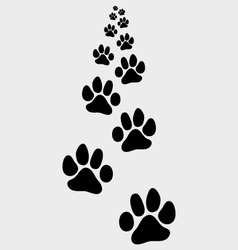 Footsteps of cat vector