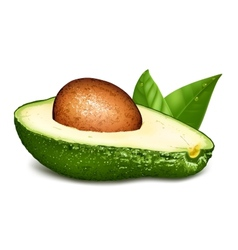 Avocado with core and leaves vector