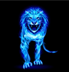 Blue fire lion vector